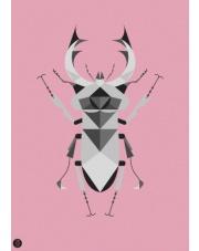 Plakat Jelonek Rogacz różowy - Kinkallo