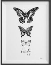 Plakat Motyle Nº2 - kreska