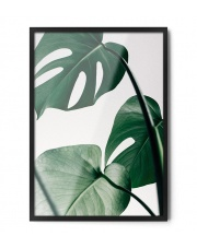 Plakat MONSTERA - FOX ART STUDIO