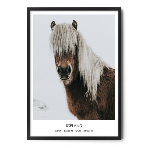 Fotografia, na której jest Plakat KUC ISLANDZKI - FOX ART STUDIO