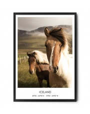 Plakat KUCE ISLANDZKIE (1) - FOX ART STUDIO