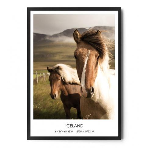Fotografia, na której jest Plakat KUCE ISLANDZKIE (1) - FOX ART STUDIO