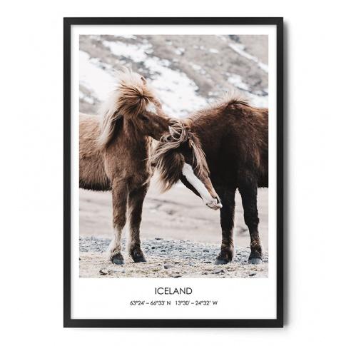 Fotografia, na której jest Plakat KUCE ISLANDZKIE - FOX ART STUDIO