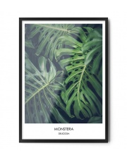 Plakat MONSTERA DELICIOSA - FOX ART STUDIO