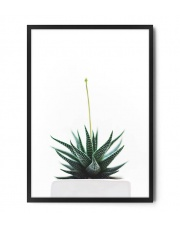 Plakat ALOES - FOX ART STUDIO