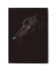 Plakat BLACK DOG - FOX ART STUDIO