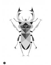Plakat Jelonek Rogacz szary - Kinkallo