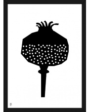 Plakat Owoc Makówka - Kinkallo