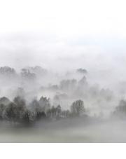 Fototapeta REBEL WALLS | Morning Fog