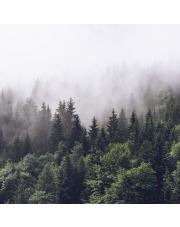 Fototapeta REBEL WALLS | Misty Fir Forest