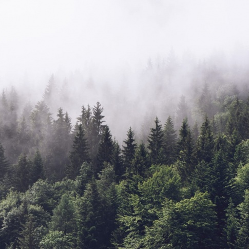 Fotografia, na której jest Fototapeta REBEL WALLS | Misty Fir Forest