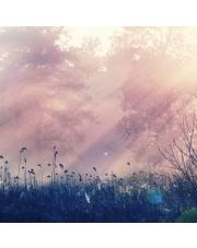 Fototapeta REBEL WALLS | Pink Dawn