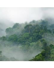 Fototapeta REBEL WALLS | Misty Forest