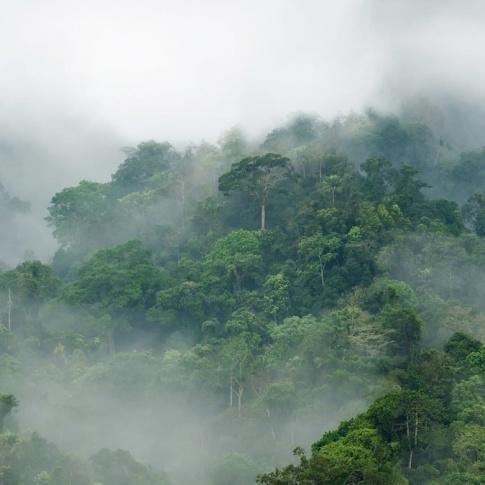 Fotografia, na której jest Fototapeta REBEL WALLS | Misty Forest