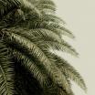 Fotografia, na której jest Fototapeta REBEL WALLS | Leaf Love