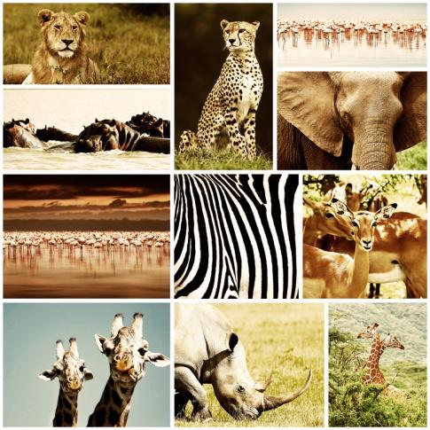 Fotografia, na której jest Fototapeta REBEL WALLS | Africa