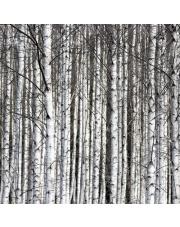 Fototapeta REBEL WALLS | Birch Trunks