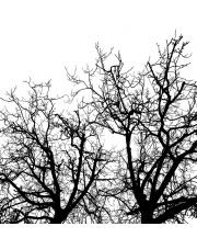 Fototapeta REBEL WALLS | Branches