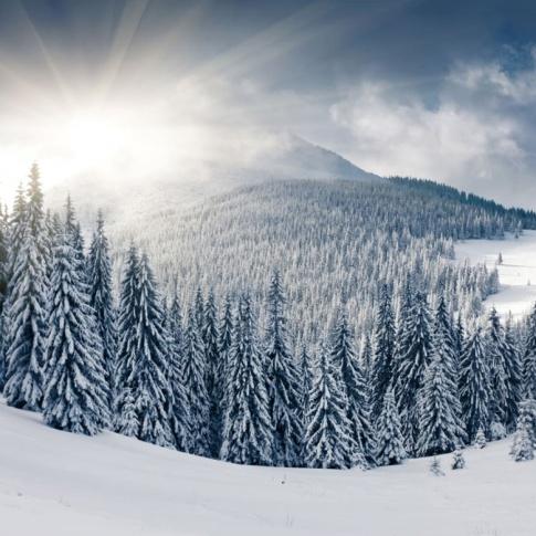 Fotografia, na której jest Fototapeta REBEL WALLS | Winter