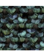 Fototapeta REBEL WALLS | Peacock Plumage