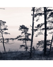 Fototapeta REBEL WALLS | Old Pine Trees