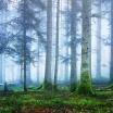Fotografia, na której jest Fototapeta REBEL WALLS | SCANDINAVIA Blue Forest