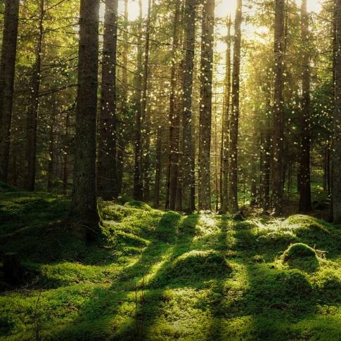 Fotografia, na której jest Fototapeta REBEL WALLS | SCANDINAVIA Forest Bath