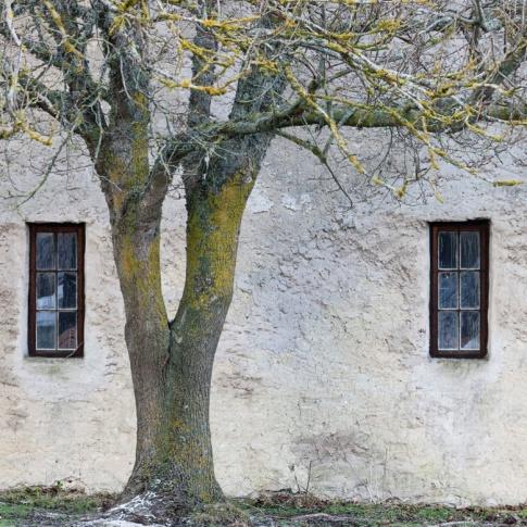 Fotografia, na której jest Fototapeta REBEL WALLS   SCANDINAVIA Under The Tree