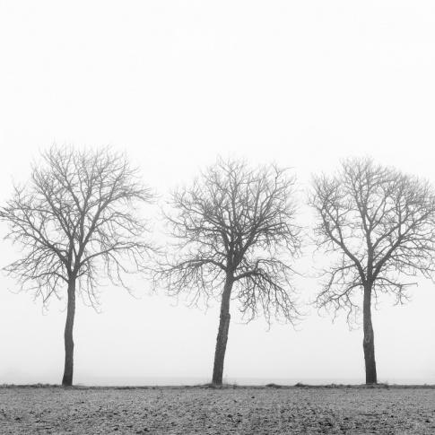 Fotografia, na której jest Fototapeta REBEL WALLS | SCANDINAVIA Tree Soldiers
