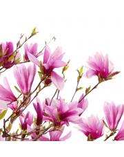 Fototapeta REBEL WALLS | Magnolia