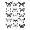Fotografia, na której jest Plakat Motyle Nº1 - kreska