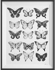 Plakat Motyle Nº1 - kreska