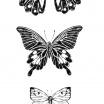 Fotografia, na której jest Plakat Motyle Nº2 - kreska