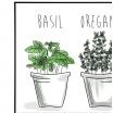 Fotografia, na której jest Plakat Aromatyczne zioła - kreska